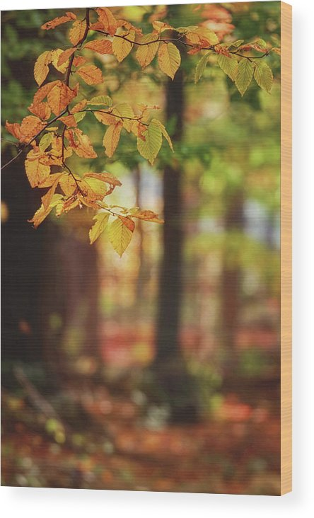 Autumn Wood Print featuring the photograph Woodland Foliage by Carrie Ann Grippo-Pike