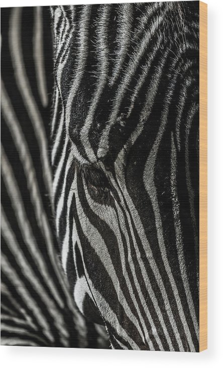 Zebra Wood Print featuring the photograph Zebra 3 by Martin Alonso