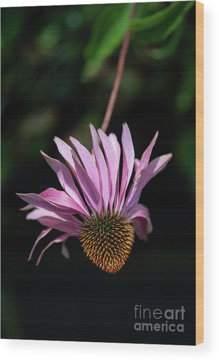 Cole's Flowers Wood Print featuring the photograph I Will Remember Summer by Marilyn Cornwell