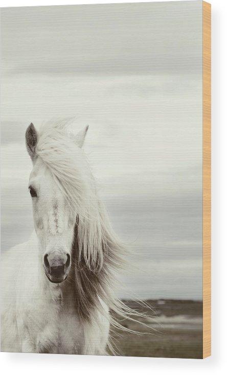 Horse Wood Print featuring the photograph ísold by Gigja Einarsdottir