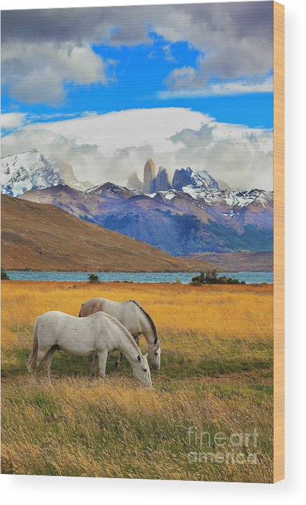 Mountains Wood Print featuring the photograph The Landscape In The National Park by Kavram