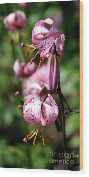 Pink Lilies Wood Print featuring the photograph Pink Lilies by Christiane Schulze Art And Photography