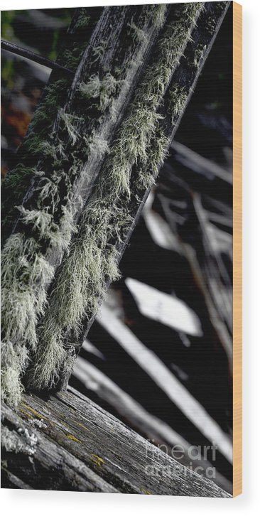 Moss Wood Print featuring the photograph Dunraven Moss by Sean Brubaker