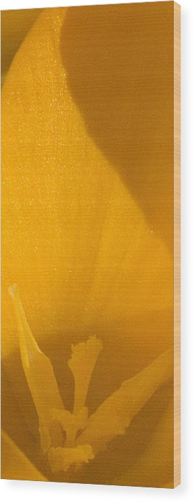 Crocus Wood Print featuring the photograph In The Morning When We Rise by Everett Bowers