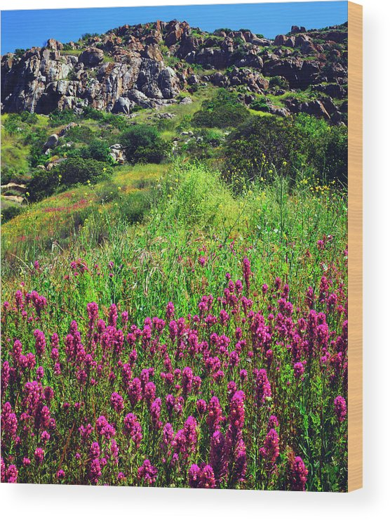 Abundance Wood Print featuring the photograph Usa, California, San Diego, Mission by Jaynes Gallery