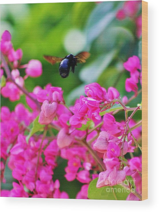 Black Bee Wood Print featuring the photograph Ebony Visitor by Craig Wood