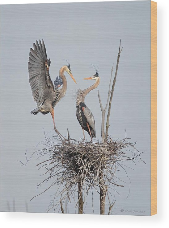 Great Blue Herons Wood Print featuring the photograph Honey Im Home by Daniel Behm