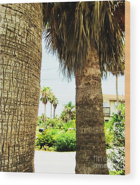Palm Tree Wood Print featuring the photograph Palm Tree 7 by Esther Rowden