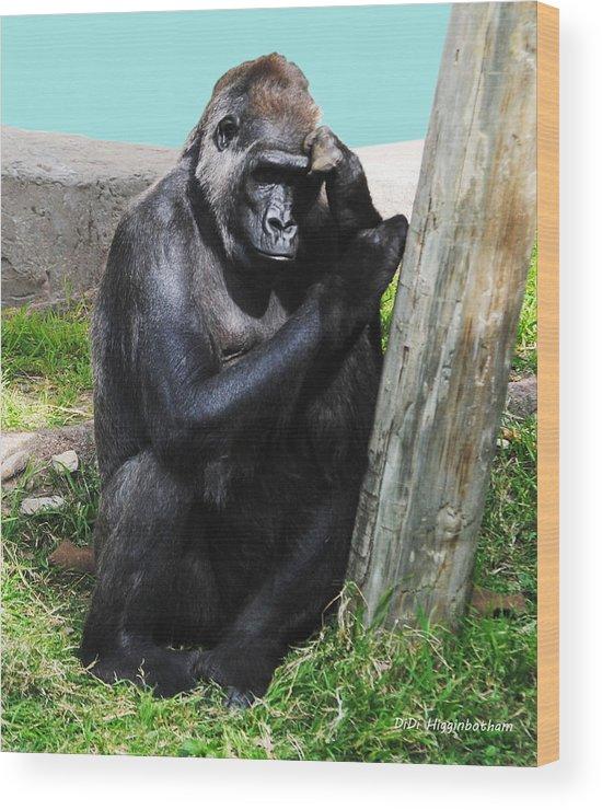 female Silverback Gorilla Wood Print featuring the photograph Whoa I Had Such A Dream by DiDi Higginbotham