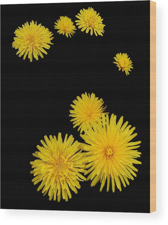 Flowers Wood Print featuring the photograph Midnight Suns by Steven Milner