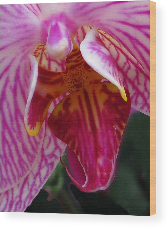 Flower Wood Print featuring the photograph Orchid Purple Extreme Close Up by Richard Singleton