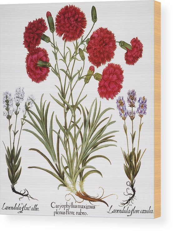 1613 Wood Print featuring the photograph Carnation & Lavender, 1613 by Granger