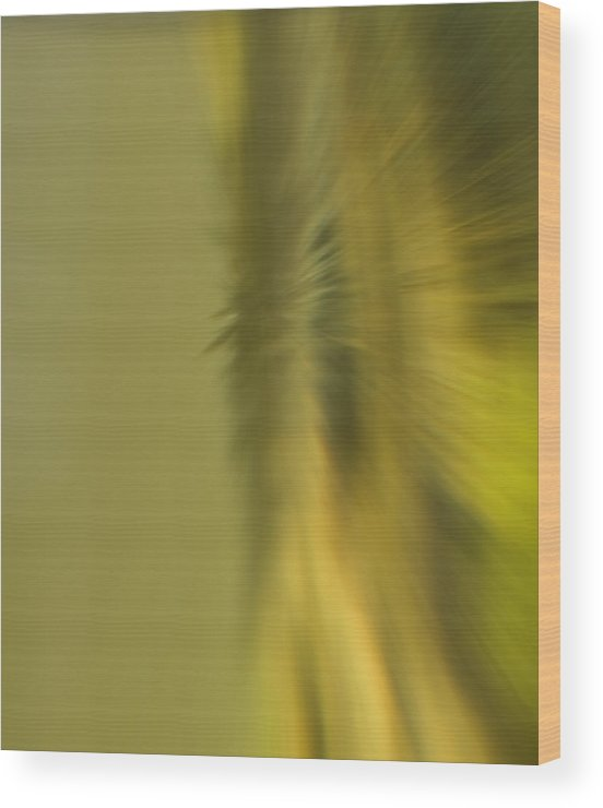 Blur Wood Print featuring the photograph Coloured Blur by Cliff Norton