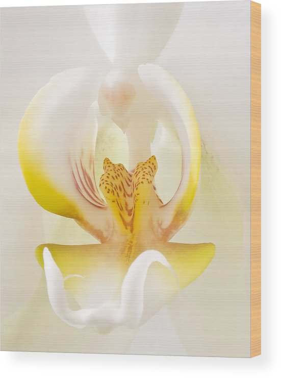 Orchid Wood Print featuring the photograph Love Flower by Naman Imagery