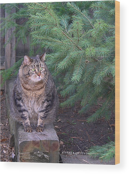 Cat Wood Print featuring the photograph Master Joey by KatagramStudios Photography