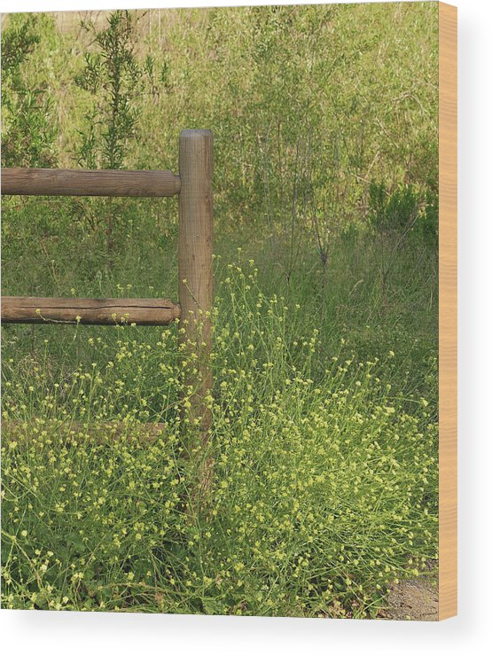 Linda Brody Wood Print featuring the photograph Mustard Grass And Fence At Entrance To Peters Canyon by Linda Brody