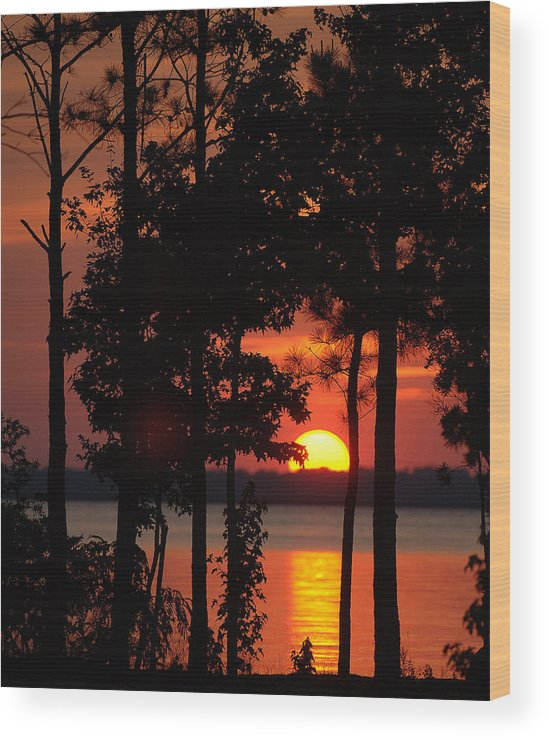 Sunset. Trees Wood Print featuring the photograph Summer Sunset by Travis Aston