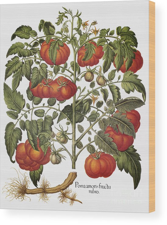 1613 Wood Print featuring the photograph Tomato, 1613 by Granger