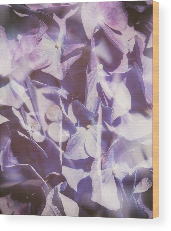 Violet Wood Print featuring the photograph Vintage Lavender Hydrangea by SharaLee Art