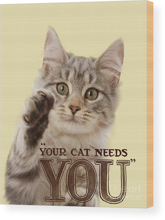 Your Cat Needs You Wood Print featuring the photograph Your Cat Needs You by Warren Photographic