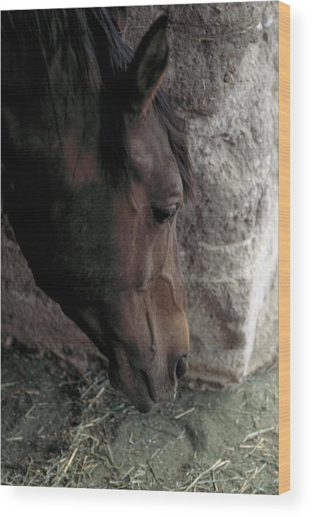 Horse Wood Print featuring the photograph Introspection by Lynard Stroud