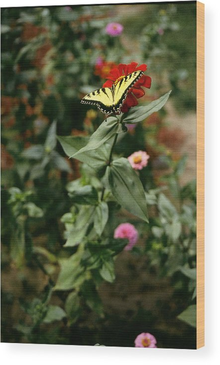 Butterfly Wood Print featuring the photograph Kathy's Butterfly by Lynard Stroud