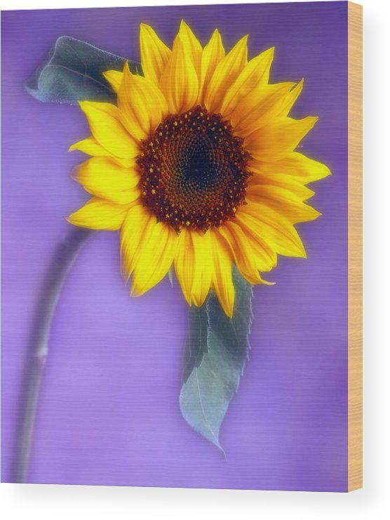 Flora Wood Print featuring the photograph Sunflower 1 by Joseph Gerges