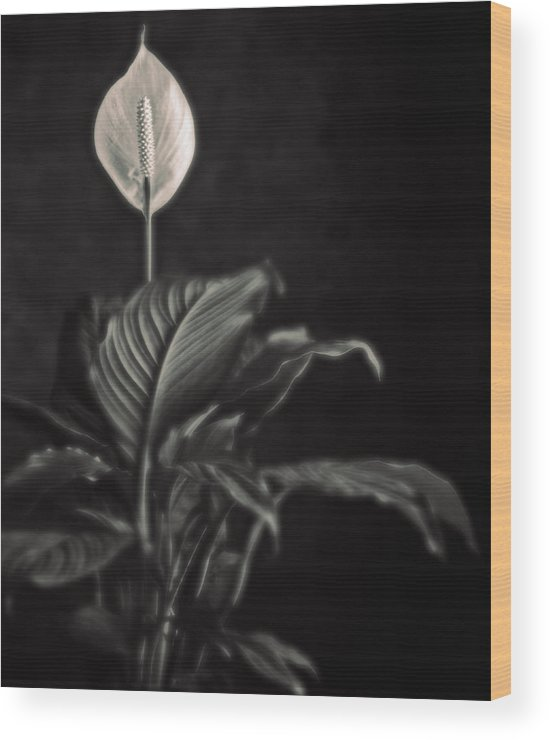 Flora Wood Print featuring the photograph White Skunk Cabbage by Joseph Gerges