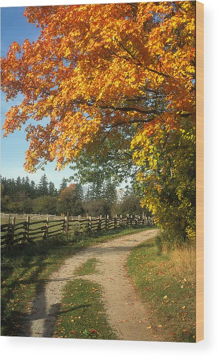 Countryside Wood Print featuring the photograph Autumn Splendor by Jim Wallace