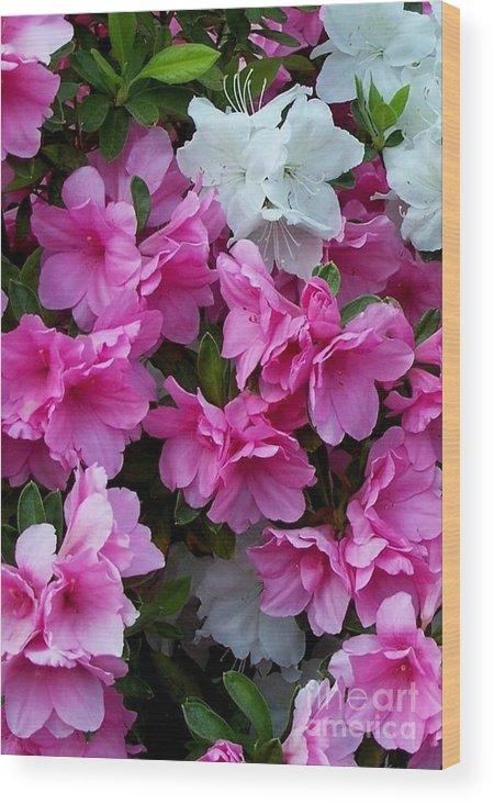 Flower Wood Print featuring the photograph Azalea Glory by David Neace