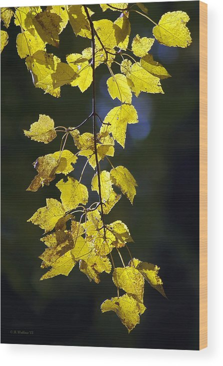 2d Wood Print featuring the photograph Backlit Leaves Of Autumn by Brian Wallace