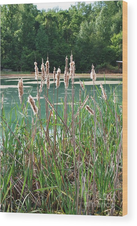 Fuzzy Wood Print featuring the photograph Cattails by Gayle Melges