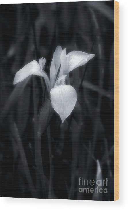 Nature Wood Print featuring the photograph Cold by Brian Raggatt