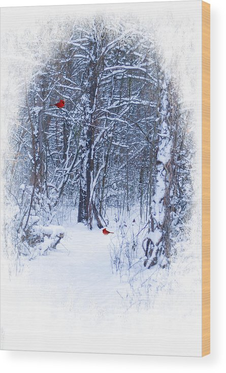 Winter Scene. Snow Landscape. Christmas Greeting Card. New Years Greeting Card. Woods. Path. Trees. Forest. Red Cardinals. Winter Landscape. Nature. Wildlife. Photography. Print. Canvas. Poster. Fine Art. Digital Art. Wood Print featuring the photograph Crisp by Mary Timman