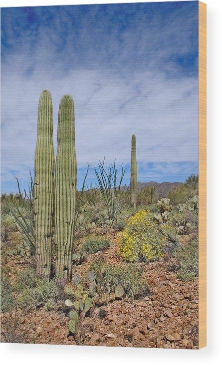 Landscape Wood Print featuring the photograph Desert Beauty by KandS PhotoArt