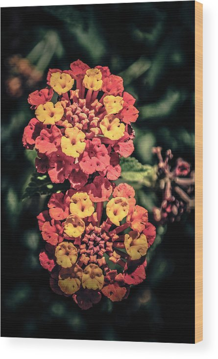 Flowers Wood Print featuring the photograph Flowers by AR Harrington Photography