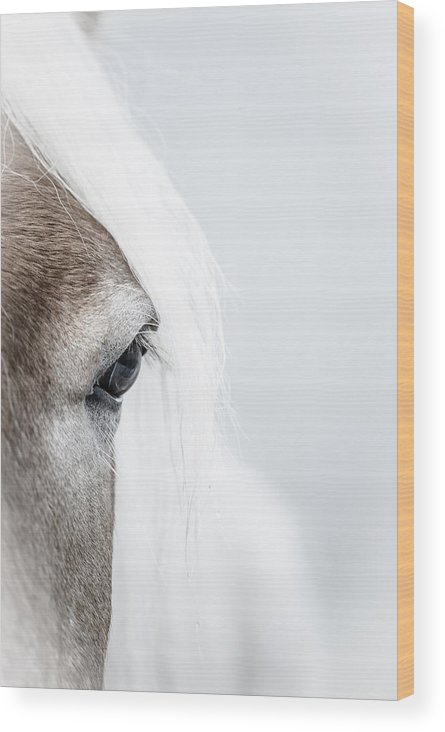 Fjordy Wood Print featuring the photograph Highkey Horse Eye by Andy-Kim Moeller