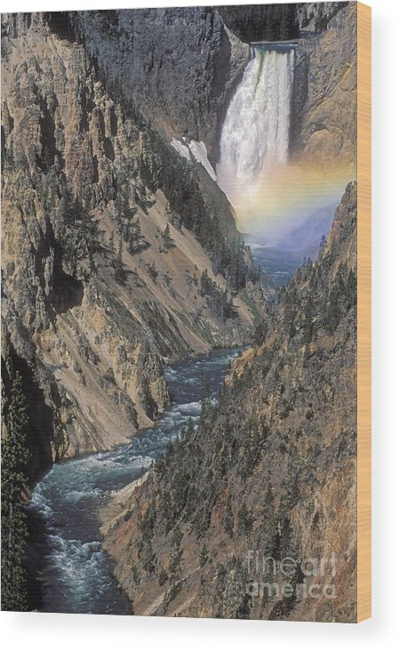 Yellowstone;waterfall; Wood Print featuring the photograph Rainbow On The Lower Falls by Sandra Bronstein