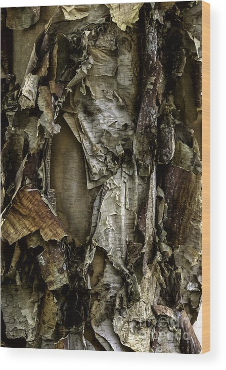 Curtis Wood Print featuring the photograph River Birch Detail by Curtis Dale