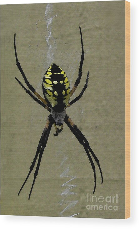 Spider Wood Print featuring the photograph Spinning Zig Zags by Patricia Januszkiewicz