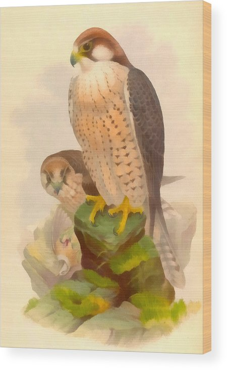 Vintage File Collection Wood Print featuring the digital art The Lanner Falcon by Vintage File Collection