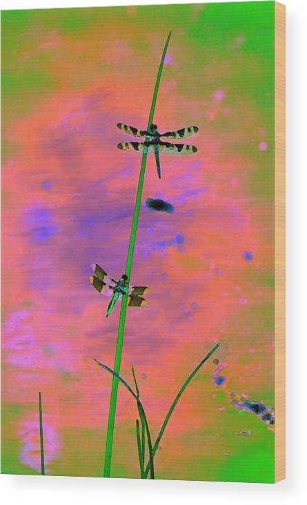 Dragonflies Wood Print featuring the photograph The Skimmer And The Whitetail Art #1 by Ben Upham III