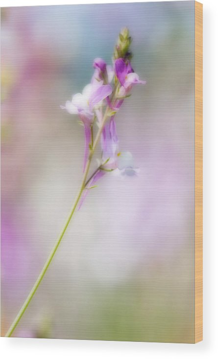 Wildflower Wood Print featuring the photograph Wildflower Beauty by Bill LITTELL
