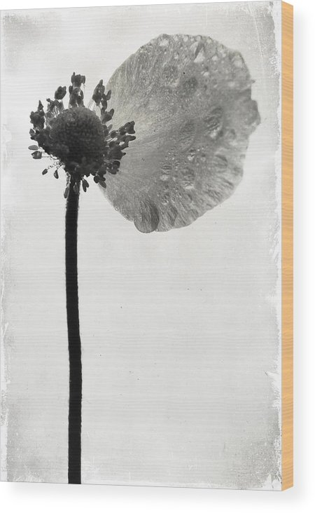 Flowers Wood Print featuring the photograph Yesterdays Gone by The Artist Project