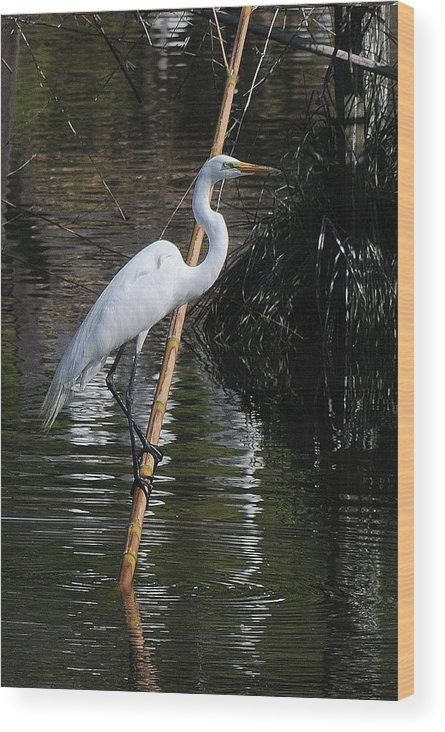 Egret Wood Print featuring the photograph A Majestic Bird by Mimi Fowler