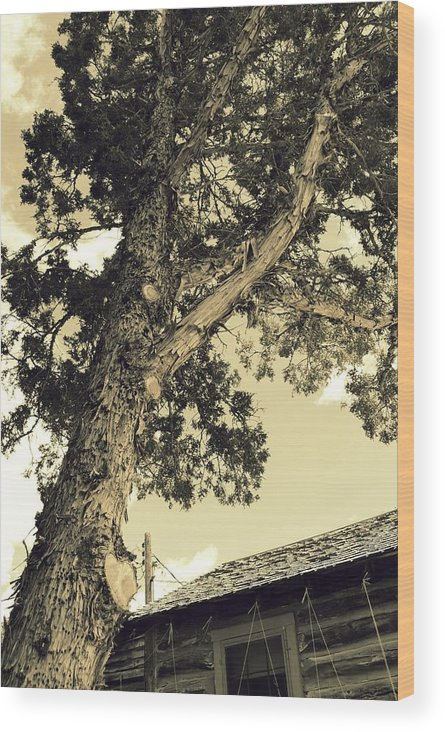Leaning Tree Wood Print featuring the photograph Faithful by Rebecca Fowler