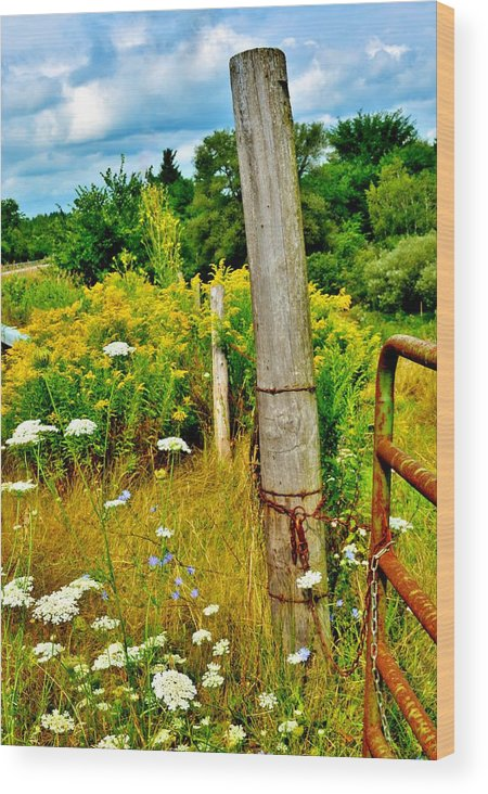 Upstate New York Wood Print featuring the photograph Fence Line by Sara Edens