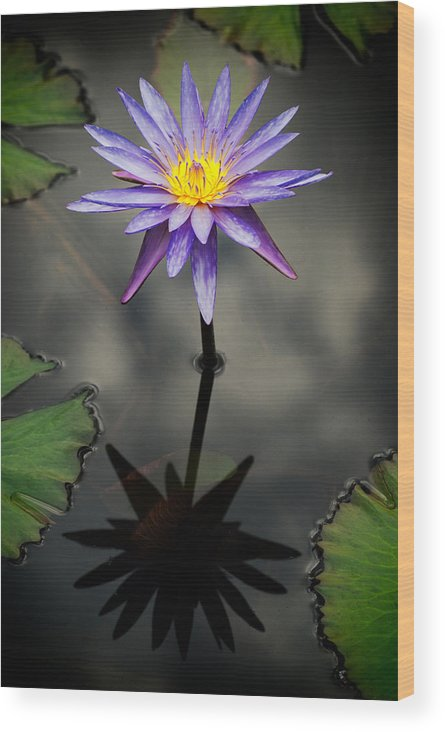 Flower Wood Print featuring the photograph Purple Lotus by Antonio Rosario