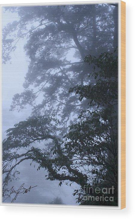 Tree Wood Print featuring the digital art Trees In Fog 2 by Maxine Bochnia