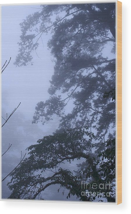Tree Wood Print featuring the digital art Trees In Fog 3 by Maxine Bochnia